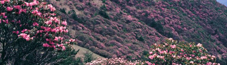 神农架首次推出旅游年卡,一卡畅游无极限