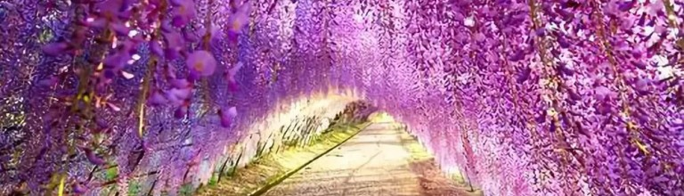 相约神龙洞!2020兴山首届紫藤花海风铃艺术节,5月15日启幕!领票啦!