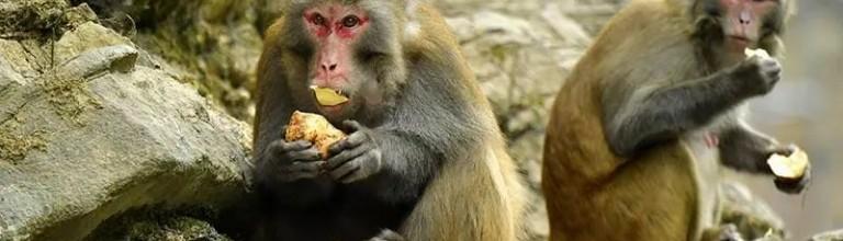 狮子关景区惊现野生猕猴群,人与自然和谐共存。