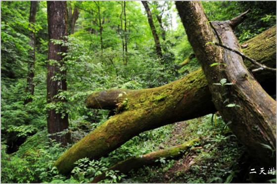 恩施旅游攻略 恩施户外攻略 鹤峰木林子攻略           木林子自然