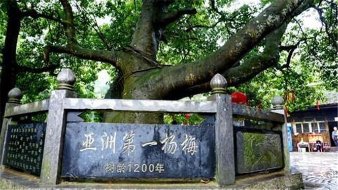 杨梅古寨景区怎么样