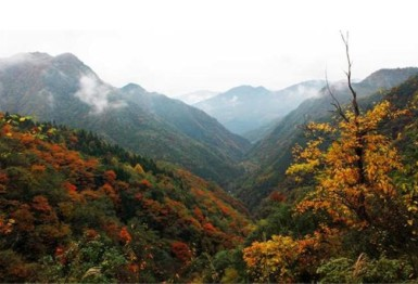鹤峰木林子