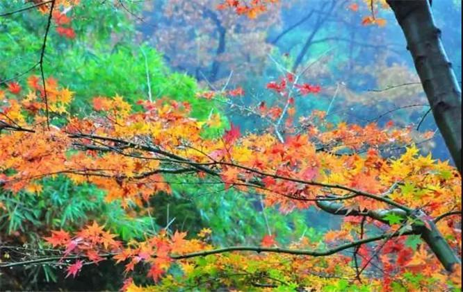 湖北神农架,神农架林区,恩施旅游秋景,恩施秋景去哪里